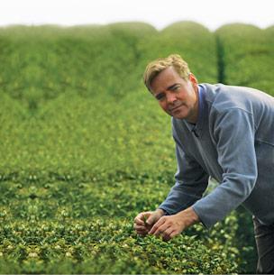Peter Hewitt Tea Forté